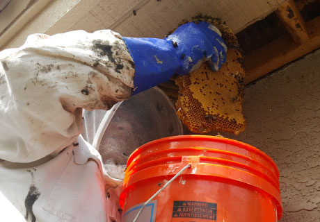 Bee Removal From Under Roof or Attic