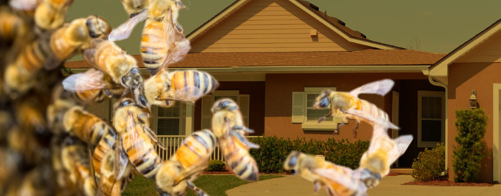 Bee Proofing Saves Arizona Residents Money and Reduces Pesticide Exposure, says University of Arizona