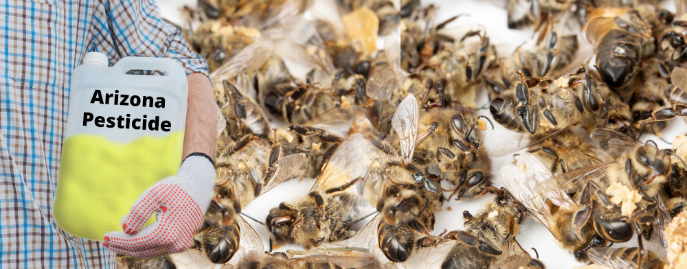 Bee Decline in Arizona Catastrophic for the Survival of Mankind