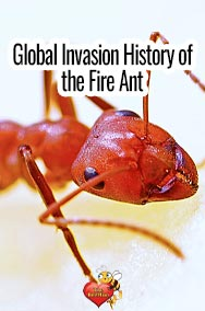 Global Invasion History of Fire Ant