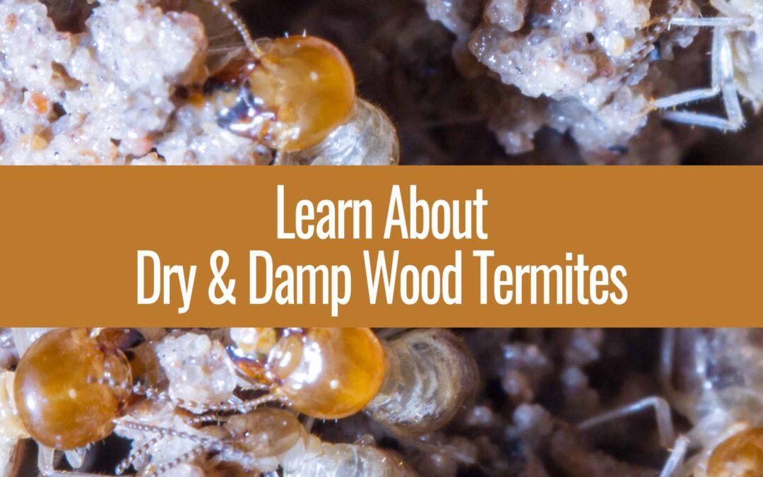Termite Species in Arizona
