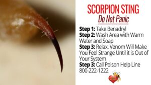 What To Do If Stung by Scorpion